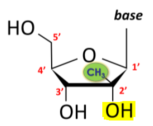 Example of one such nucleoside